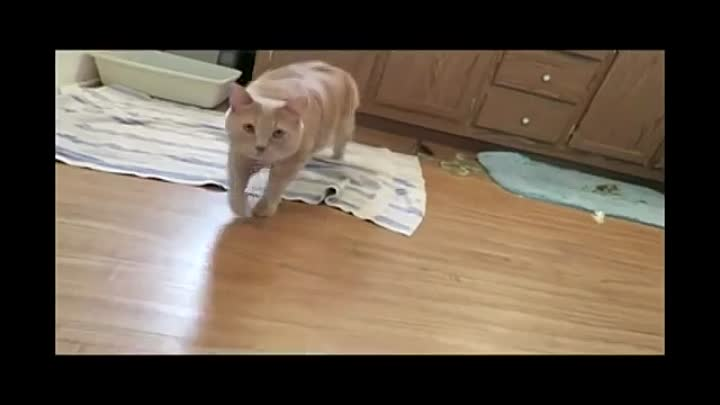 Видео: Funny Cat & Cute Kittens Fail Animals Videos Best Funny Kitty Cat Video № 27 | Morsomme Katter № 27