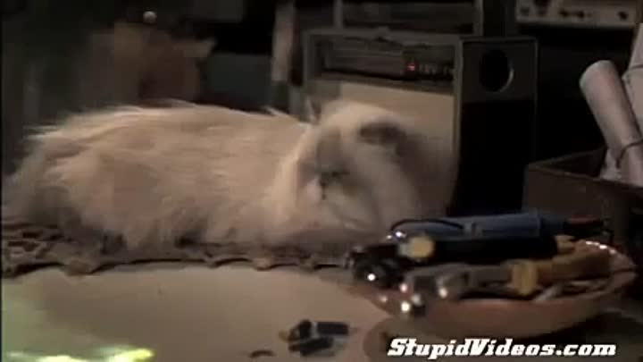 Perpetual Motion Machine Funny Videos 2015