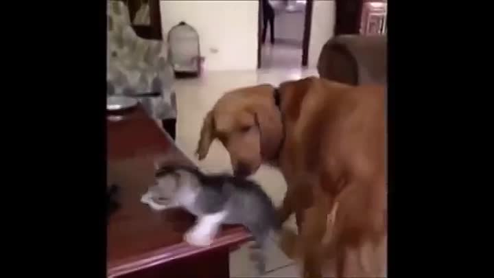 Видео: Funny Cat & Cute Kittens Fail Animals Videos Best Funny Kitty Cat Video № 22 | Morsomme Katter № 22
