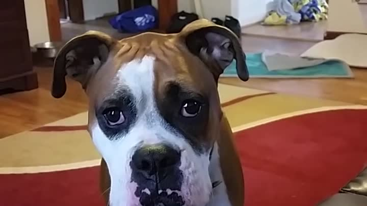 Видео: No. You can't go on the couch.