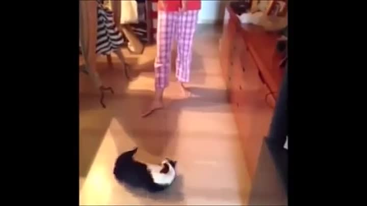 Видео: Funny Cat & Cute Kittens Fail Animals Videos Best Funny Kitty Cat Video № 24 | Morsomme Katter № 24
