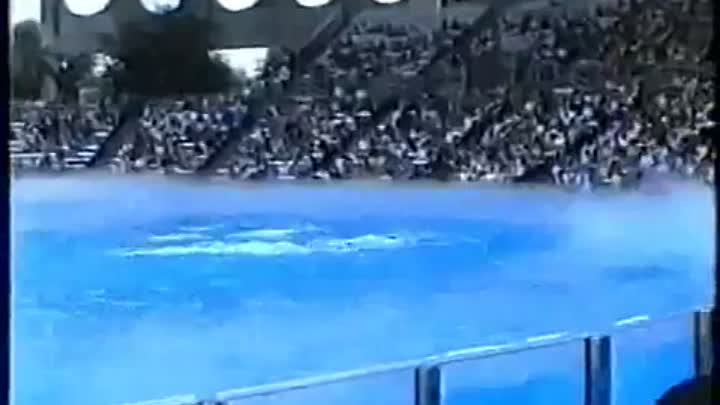 Видео: Killer Wahle attacke Show Orlando Seaworld 2000 Munich