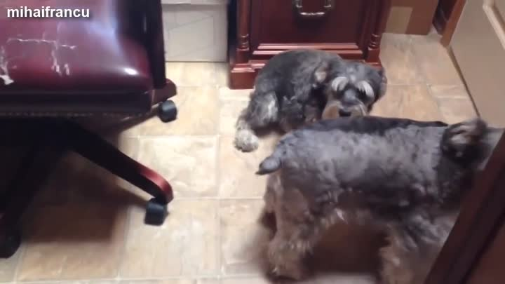 Видео: Best Of Funny Guilty Dog Compilation 2014
