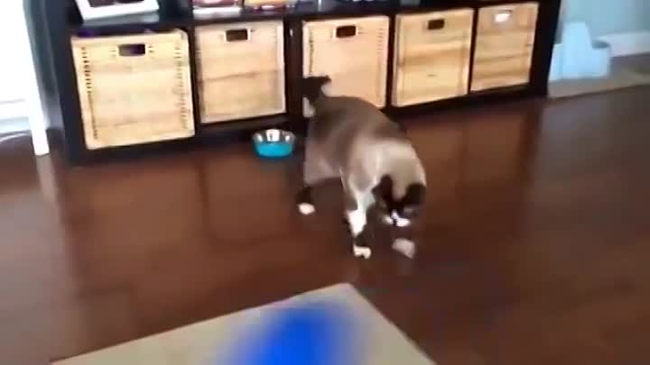 Crazy Cat scared of new rug