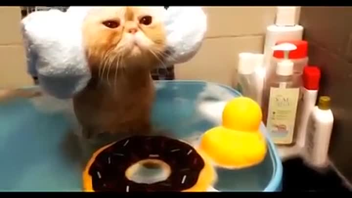 Видео: Funny Cats - Funny Kitty Cat Videos Compilation - Cute Kittens Fail Video №45 - Приколы с котами №45