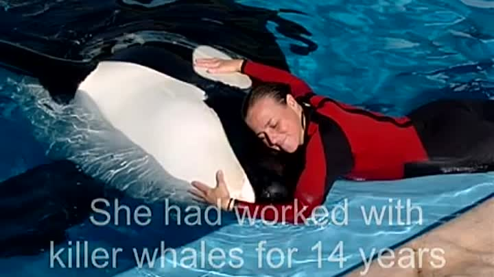 Видео: Killer Whale drowns trainer Dawn Brancheau at seaworld