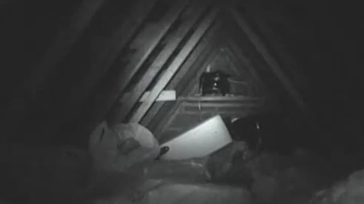 Видео: Real Poltergeist Caught On Tape In Attic. More Poltergeist Footage