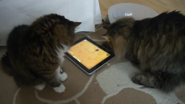 "Видео: Cats playing ""Game for Cats"" with Apple iPad"
