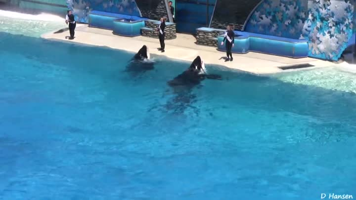 """The Complete SeaWorld Shamu """"Believe"""" Show (When Trainers Were in the Water!!!)"""