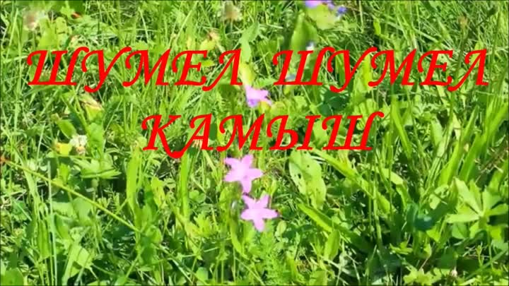 Band ODESSA ☘☀️☘ ШУМЕЛ, ШУМЕЛ КАМЫШ ☘☀️☘ Popular BAND in YouTube
