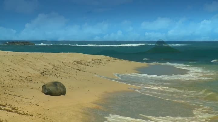 RELAXATION VIDEO #2  HD OAHU Hawaii BEACHES Ocean Beach Wave
