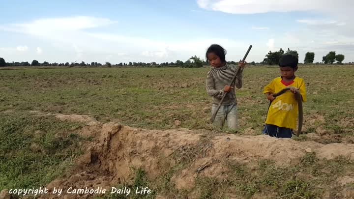 Видео: Terrifying !! Brave Little Sister And Brother Catch Many Snakes By Digging Hole Near Their Cows