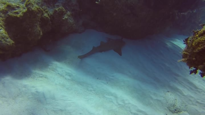 Scuba instructor pulls kitchen knife out of shark's head in Cayman