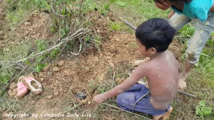 Terrifying!! Little Sister And Brother Catch Four Big Snakes While Digging Hole Near Their House