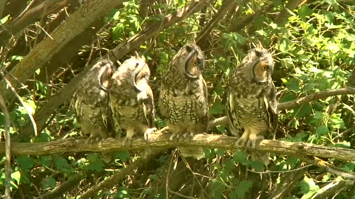 Funny Owls And Cute Owl | Sweet Owls in Videos Compilation