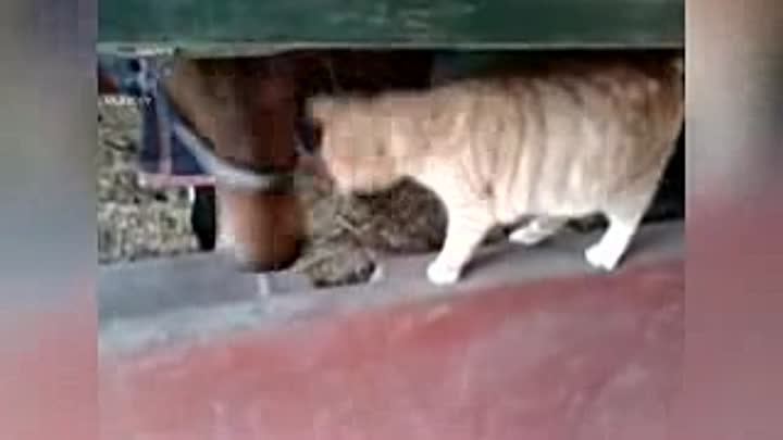 Видео: Horse And Cat Are Best Friends Compilation_low.mp4