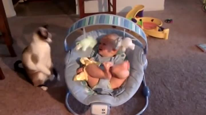 Видео: Baby laughs while cat plays with his toys
