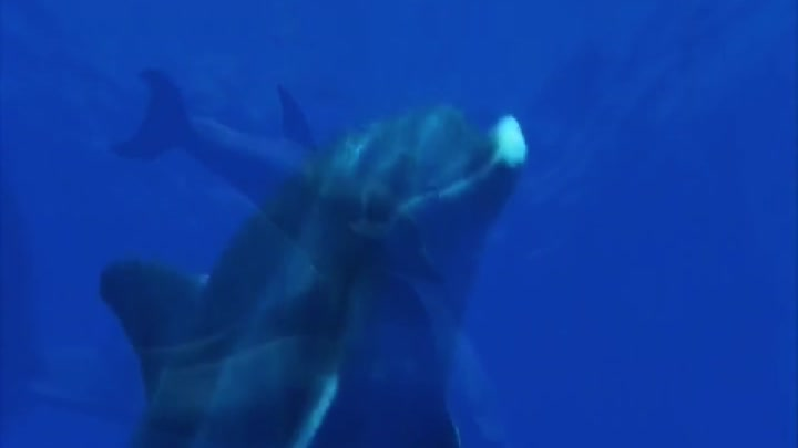 Enigma - The Dream of the Dolphin: New Born Dolphins