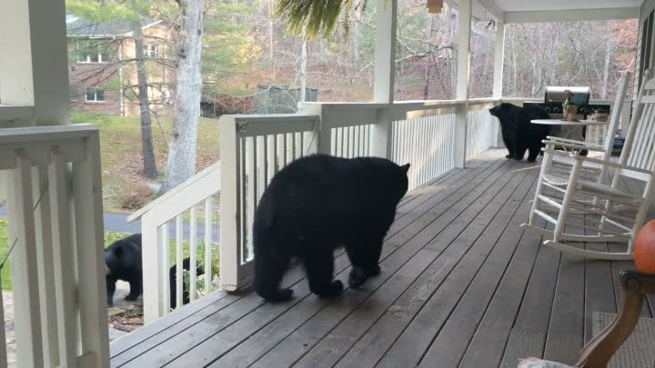 Видео: A Quick Drop-in by the Bear Family