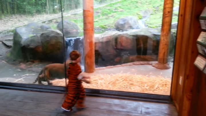 Tiger Cubs! Marshall and Kali at the Point Defiance Zoo in Tacoma, WA