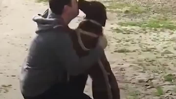Видео: At first this dog didn't realize that this guy is her long-last dad but once she does, she goes WILD 💕