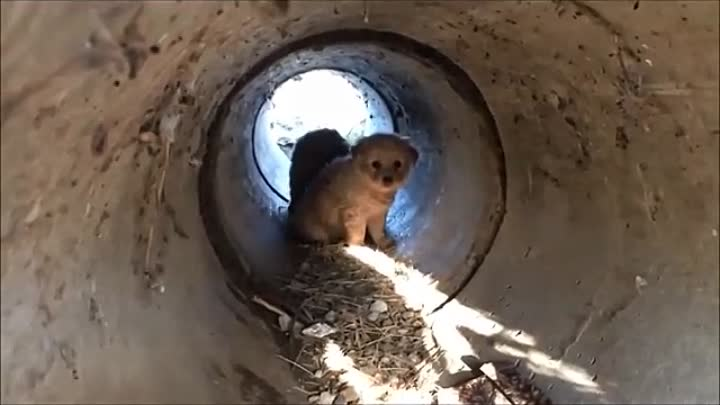 Scared Puppies Rescued from a Pipe.