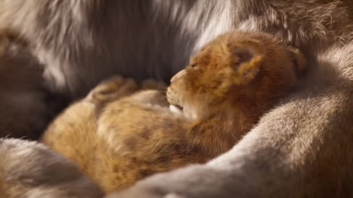 Видео: The Lion King Official Teaser Trailer