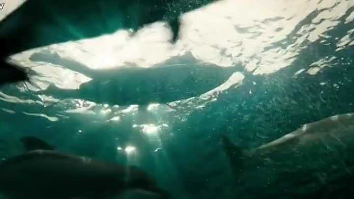 Видео: The Shallows 2016