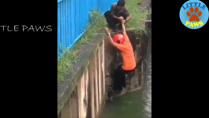 Видео: TOP Animal Rescues, Emotional/Inspiring/Funny Will Melt Your Heart Compilation. REAL LIFE HEROES