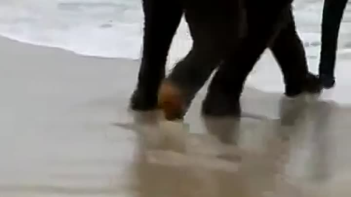 When a baby elephant sees the sea for the first time!